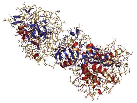 hemophilia: Coagulation factor IXa (FIXa), crystal structure. Hereditary deficiency causes hemophilia B (Christmas Disease). Cartoon & wire representation. Secondary structure coloring.