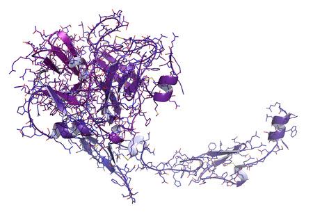 recombinant: Fattore di coagulazione VII attivato (FVIIa), struttura chimica. Gioca un ruolo nella coagulazione del sangue (coagulazione). Proteina ricombinante utilizzato nel trattamento dell'emofilia. Cartoon e filo di rappresentanza. Colorazione Gradient. Archivio Fotografico