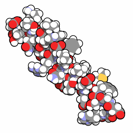 recombinant: Il glucagone-like peptide 2 (GLP-2) molecola peptidica. La sua teduglutide analogico ricombinante � usato per trattare la sindrome dell'intestino corto, una malattia orfana. Atomi visualizzati come sfere, convenzionali codice colore: idrogeno (bianco), carbonio (grigio), ossigeno (rosso), azoto ( Archivio Fotografico