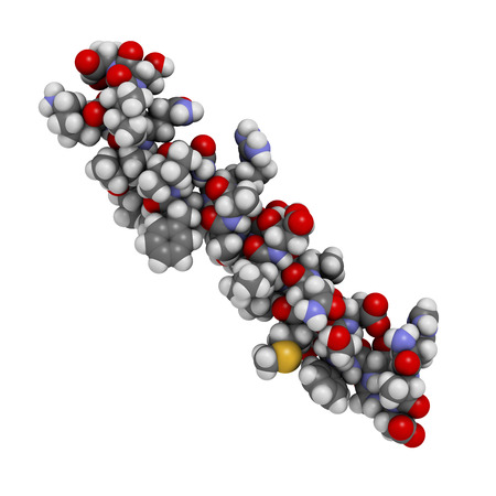 glucagon: Glucagon-like peptide 2 (GLP-2) peptide molecule. Its recombinant analog teduglutide is used to treat Short-Bowel Syndrome, an orphan disease. Atoms shown as spheres with conventional color coding: hydrogen (white), carbon (grey), oxygen (red), nitrogen ( Stock Photo