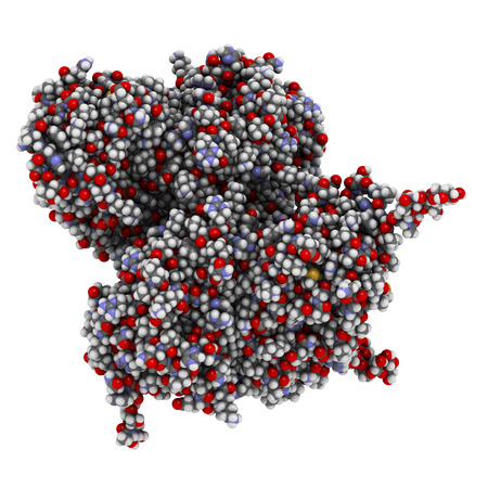 recombinant: Glucocerebrosidase (beta-glucosidase) enzyme molecule. Deficient in Gauchers disease. Recombinant analog used as drug in Gauchers disease. Atoms shown as spheres with conventional color coding: hydrogen (white), carbon (grey), oxygen (red), nitrogen (bl