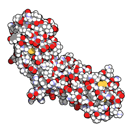 Tissue factor (TF, extracellular part) protein. Essential in extrinsic pathway of blood coagulation. Atoms shown as spheres with conventional color coding: hydrogen (white), carbon (grey), oxygen (red), nitrogen (blue), sulfur (yellow). photo