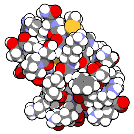 venom: Agitoxin scorpion toxin. Neurotoxin present in deathstalker scorpion venom. Blocks Shaker potassium channels. Atoms shown as spheres with conventional color coding: hydrogen (white), carbon (grey), oxygen (red), nitrogen (blue), sulfur (yellow).