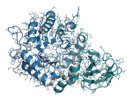 Alpha-Galactosidase (Agalsidase) Enzym. Ursache des Morbus Fabry. Als Enzymersatztherapie verabreicht wird. Cartoon & Draht-Darstellung. Kettenfarbverlauf. Standard-Bild - 24079217