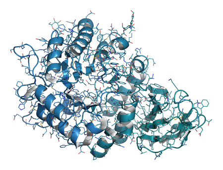 dimer: Alpha-galactosidase (Agalsidase) enzyme. Cause of Fabrys disease. Administered as enzyme replacement therapy. Cartoon & wire representation. Chain gradient coloring. Stock Photo