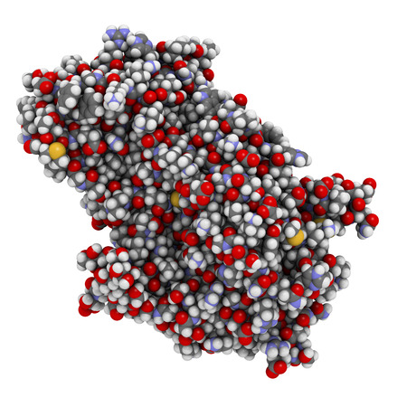 enzyme: Alpha-galactosidase (Agalsidase) enzyme. Cause of Fabrys disease. Administered as enzyme replacement therapy. Atoms shown as spheres with conventional color coding: hydrogen (white), carbon (grey), oxygen (red), nitrogen (blue), sulfur (yellow).