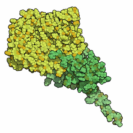 monophosphate: AMP-activated protein kinase (AMPK) fragment with AMP bound. AMPK regulates cellular metabolism depending on energy availability.  Atoms shown as spheres. Coloring: per chain. Stock Photo