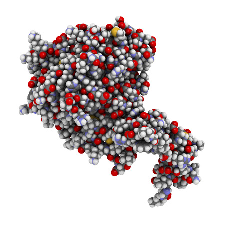 catalytic: Human activated protein C (APC, drotrecogin alfa, without Gla-domain). Has anti-thrombotic and anti-inflammatory properties. Used to treat sepsis (obsolete). Atoms shown as spheres with conventional color coding: hydrogen (white), carbon (grey), oxygen (r Stock Photo
