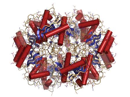 leucemia: La asparaginasa mol�cula de enzima. Se utiliza en el tratamiento de la leucemia (crisantaspase). Dibujos animados y representaci�n de alambre. Estructura colorante secundario. Foto de archivo