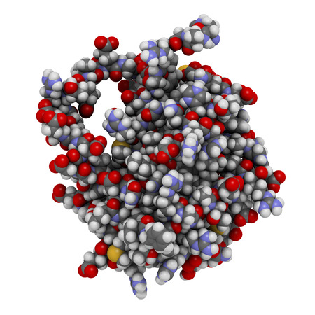 BCL-2 protein. Prevents apoptosis (cell death) and often found overexpressed in cancer cells. The corresponding BCL2 gene is a proto-oncogene. Atoms shown as spheres with conventional color coding: hydrogen (white), carbon (grey), oxygen (red), nitrogen ( photo