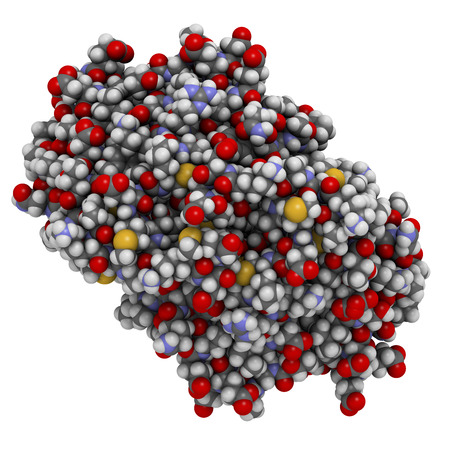glycoprotein: Cat allergen (Fel d 1) protein. Major cause of allergy to cats. Atoms shown as spheres with conventional color coding: hydrogen (white), carbon (grey), oxygen (red), nitrogen (blue), sulfur (yellow). Stock Photo