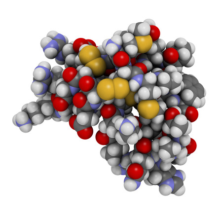 disulfide: Chlorotoxin scorpion toxin. Peptide toxin present in deathstalker scorpion venom. Blocks chloride channels. Atoms shown as spheres with conventional color coding: hydrogen (white), carbon (grey), oxygen (red), nitrogen (blue), sulfur (yellow).