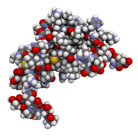 CXCL1 cytokine (AKA melanoma growth-stimulatory activity), chemical structure. Implicated in the pathogenesis of melanoma skin cancer. Atoms shown as spheres with conventional color coding: hydrogen (white), carbon (grey), oxygen (red), nitrogen (blue), s Stock Photo