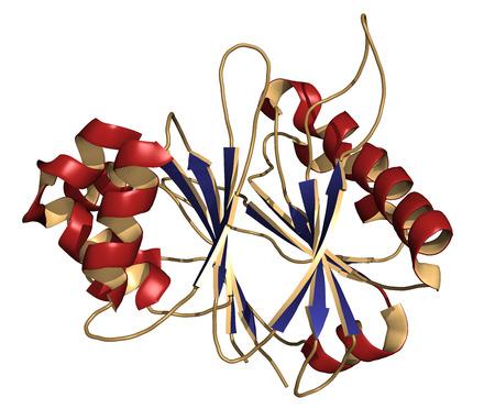 recombinant: Ricombinante enzima taglio DNasi I DNA (dornase alfa), struttura chimica. Usato nel trattamento della fibrosi cistica. La rappresentazione del fumetto. Struttura colorante secondario.