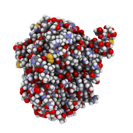 recombinant: Ricombinante enzima taglio DNasi I DNA (dornase alfa), struttura chimica. Usato nel trattamento della fibrosi cistica. Atomi visualizzati come sfere, convenzionali codice colore: idrogeno (bianco), carbonio (grigio), ossigeno (rosso), azoto (blu), zolfo (giallo). Archivio Fotografico