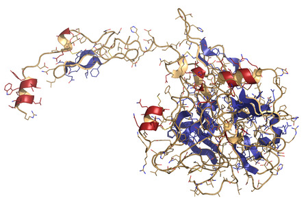 coagulation: Activated coagulation factor VII (FVIIa), chemical structure. Plays role in blood clotting (coagulation). Recombinant protein used in hemophilia treatment. Cartoon & wire representation. Secondary structure coloring. Stock Photo