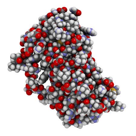 recombinant: Granulociti fattore stimolante le colonie (GCSF, filgrastim) molecola. Usato per trattare la neutropenia. Atomi visualizzati come sfere, convenzionali codice colore: idrogeno (bianco), carbonio (grigio), ossigeno (rosso), azoto (blu), zolfo (giallo).