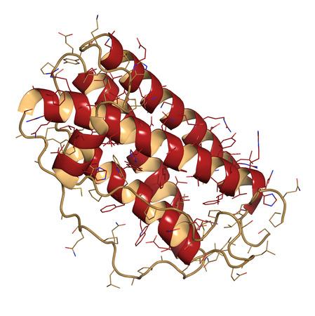 recombinant: Granulocyte colony-stimulating factor (GCSF, filgrastim) molecule. Used to treat neutropenia. Cartoon & wire representation. Secondary structure coloring.