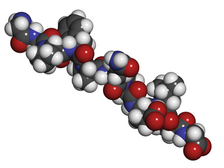 celiac disease: Gliadin derived peptide. Immunogenic breakdown product of gliadin (gluten), playing an essential role in celiac disease. Atoms shown as spheres with conventional color coding: hydrogen (white), carbon (grey), oxygen (red), nitrogen (blue).