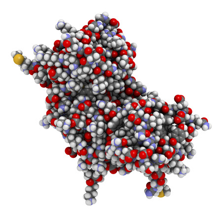 Interferon gamma (IFNg) cytokine molecule, chemical structure. Recombinant form used in treatment of osteopetrosis and chronic granulomatous disease. Atoms shown as spheres with conventional color coding: hydrogen (white), carbon (grey), oxygen (red), nit Stock Photo - 24079285