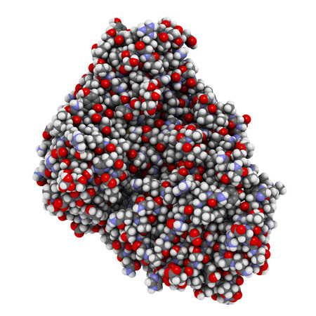 Ricin castor bean plant poisonous protein, chemical structure. Atoms shown as spheres with conventional color coding: hydrogen (white), carbon (grey), oxygen (red), nitrogen (blue), sulfur (yellow).