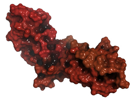 extracellular: Tissue factor (TF, extracellular part) protein. Essential in extrinsic pathway of blood coagulation. Surface model, gradient coloring. Stock Photo
