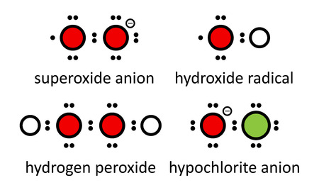 Reactive oxygen species (ROS): superoxide anion, hydroxide radicaal, waterstofperoxide en hypochloriet-anion. Lewis elektron dot diagrammen; atomen weergegeven als gekleurde cirkels: waterstof (wit), zuurstof (rood), chloor (groen).