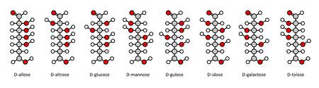 glucose: D-aldohexose sugars: allose, altrose, glucose, mannose, gulose, idose, galactose, talose. Fischer-like projections.