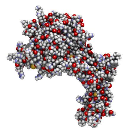 protease: Prote�na C activada humana (APC, drotrecogina alfa, sin dominio Gla). Tiene propiedades anti-tromb�ticos y anti-inflamatorios. Se utiliza para tratar la sepsis (obsoleto). Los �tomos que se muestran como esferas con codificaci�n convencional color: hidr�geno (blanco), el carbono (gris), ox�geno (r