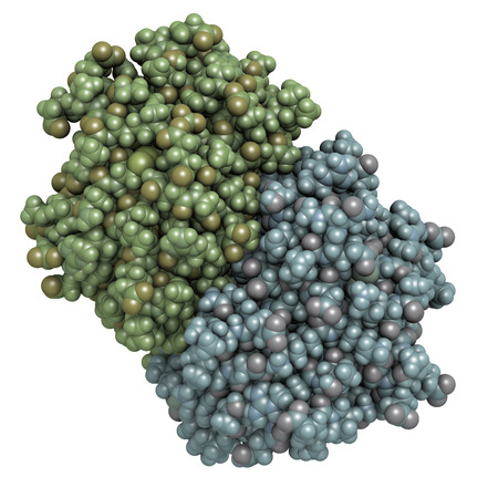 allergen: Cat allergen (Fel d 1) protein. Major cause of allergy to cats. Atoms shown as spheres. Coloring: per chain.