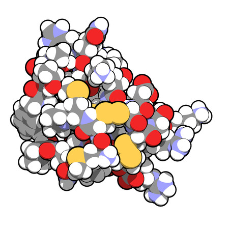 toxin: Chlorotoxin scorpion toxin. Peptide toxin present in deathstalker scorpion venom. Blocks chloride channels. Atoms shown as spheres with conventional color coding: hydrogen (white), carbon (grey), oxygen (red), nitrogen (blue), sulfur (yellow).