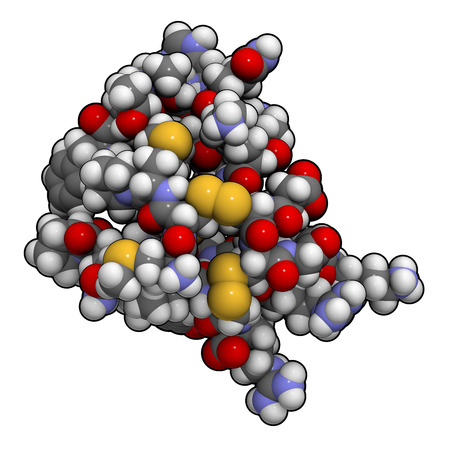 venom: Chlorotoxin scorpion toxin. Peptide toxin present in deathstalker scorpion venom. Blocks chloride channels. Atoms shown as spheres with conventional color coding: hydrogen (white), carbon (grey), oxygen (red), nitrogen (blue), sulfur (yellow).
