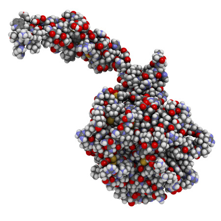 protease: Activated coagulation factor VII (FVIIa), chemical structure. Plays role in blood clotting (coagulation). Recombinant protein used in hemophilia treatment. Atoms shown as spheres with conventional color coding: hydrogen (white), carbon (grey), oxygen (red Stock Photo