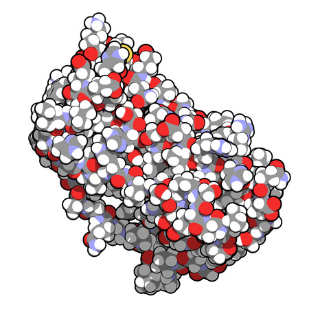 Granulocyte colony-stimulating factor (GCSF, filgrastim) molecule. Used to treat neutropenia. Atoms shown as spheres with conventional color coding: hydrogen (white), carbon (grey), oxygen (red), nitrogen (blue), sulfur (yellow). photo