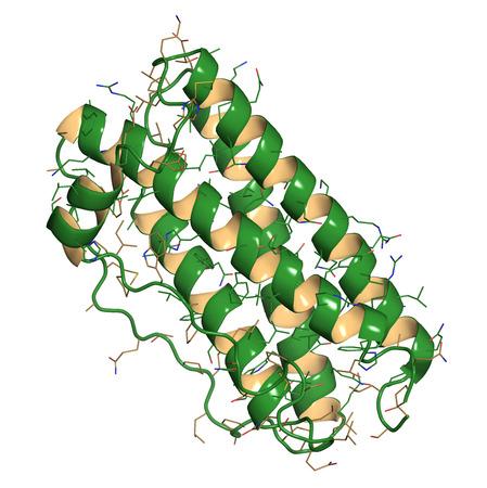 recombinant: Granulociti fattore stimolante le colonie (GCSF, filgrastim) molecola. Usato per trattare la neutropenia. Cartoon e filo di rappresentanza. Struttura colorante secondario.