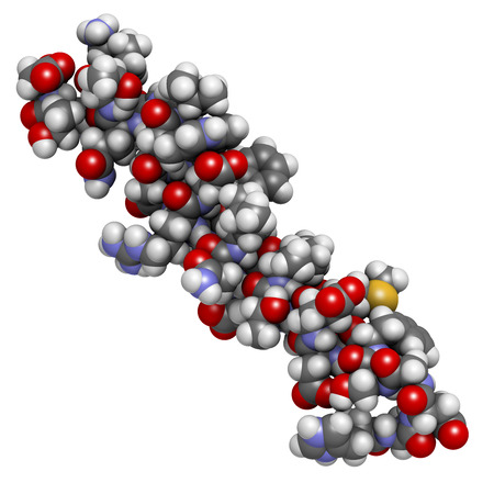 recombinant dna: Glucagon-like peptide 2 (GLP-2) peptide molecule. Its recombinant analog teduglutide is used to treat Short-Bowel Syndrome, an orphan disease. Atoms shown as spheres with conventional color coding: hydrogen (white), carbon (grey), oxygen (red), nitrogen ( Stock Photo