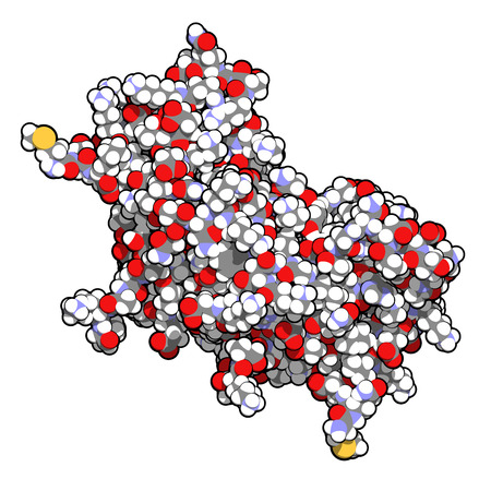 dimer: Interferon gamma (IFNg) cytokine molecule, chemical structure. Recombinant form used in treatment of osteopetrosis and chronic granulomatous disease. Atoms shown as spheres with conventional color coding: hydrogen (white), carbon (grey), oxygen (red), nit Stock Photo