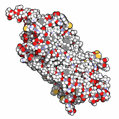 visual perception: rhodopsin (visual purple) light perception protein, chemical structure. Biological pigment molecule present in the eye. Atoms shown as spheres with conventional color coding: hydrogen (white), carbon (grey), oxygen (red), nitrogen (blue), sulfur (yellow).