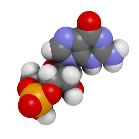 guanosine: Cyclic guanosine monophosphate (cGMP) molecule. Important second messenger, produced by guanylate cyclase, broken down by phosphodiesterase (PDE). Atoms are represented as spheres with conventional color coding: hydrogen (white), carbon (grey), nitrogen (