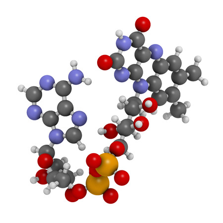 cofactor: Flavin adenine dinucleotide (FAD) redox coenzyme molecule. Atoms are represented as spheres with conventional color coding: hydrogen (white), carbon (grey), nitrogen (blue), oxygen (red), bromine (brown). Stock Photo