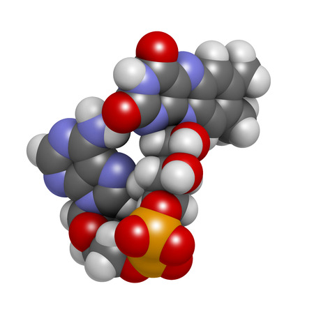 riboflavin: Flavin adenine dinucleotide (FAD) redox coenzyme molecule. Atoms are represented as spheres with conventional color coding: hydrogen (white), carbon (grey), nitrogen (blue), oxygen (red), bromine (brown). Stock Photo