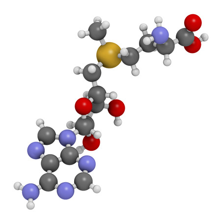 S-adenosyl methionine (SAM) molecule. Essential in several metabolic pathways. Often found in dietary supplements. Atoms are represented as spheres with conventional color coding: hydrogen (white), carbon (grey), nitrogen (blue), oxygen (red), sulfur (yel Stock fotó