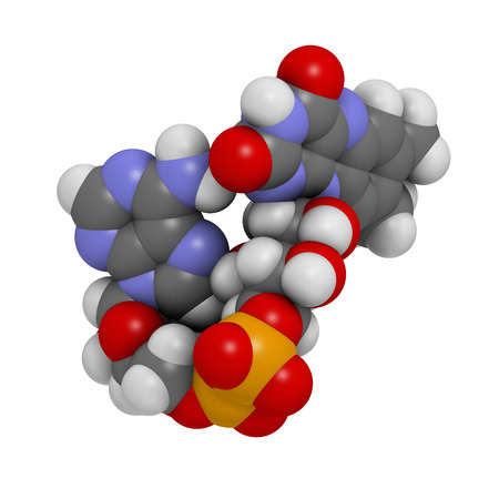 adenine: Flavin adenine dinucleotide (FAD) redox coenzyme molecule. Atoms are represented as spheres with conventional color coding: hydrogen (white), carbon (grey), nitrogen (blue), oxygen (red), bromine (brown). Stock Photo