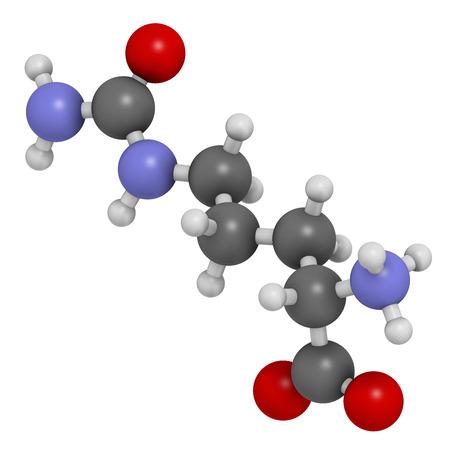 Citrullin Aminosäuremolekül. Vertreten in einigen sportlichen Nahrungsergänzungsmittel. Wasserstoff (weiß), Kohlenstoff (grau), Stickstoff (blau), Sauerstoff (rot): Atome sind als Kugeln mit herkömmlichen Farbkodierung dargestellt. Standard-Bild - 25287766