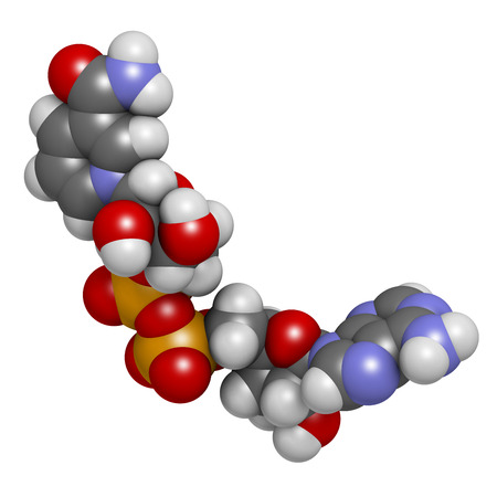 adenine: Nicotinamide adenine dinucleotide (NAD+) coenzyme molecule. Important coenzyme in many redox reactions. Atoms are represented as spheres with conventional color coding: hydrogen (white), carbon (grey), nitrogen (blue), oxygen (red), phosphorus (orange).