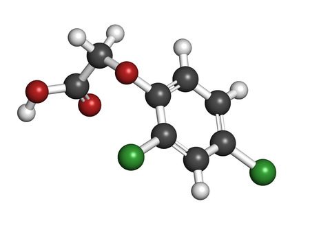 2,4-D (2,4-dichlorophenoxyacetic acid) Agent Orange ingredient. Synthetic auxin plant hormone, used as pesticide and herbicide and ingredient of Agent Orange. Atoms are represented as spheres with conventional color coding: hydrogen (white), carbon (grey) photo