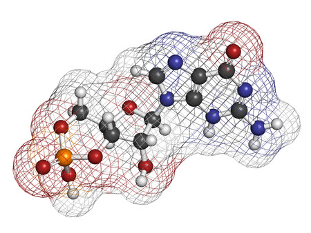 Cyclic guanosine monophosphate (cGMP) molecule. Important second messenger, produced by guanylate cyclase, broken down by phosphodiesterase (PDE). Atoms are represented as spheres with conventional color coding: hydrogen (white), carbon (grey), nitrogen (