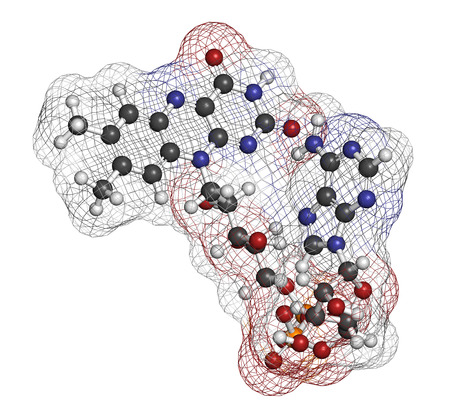 Flavin adenine dinucleotide (FAD) redox coenzyme molecule. Atoms are represented as spheres with conventional color coding: hydrogen (white), carbon (grey), nitrogen (blue), oxygen (red), bromine (brown). Stock Photo
