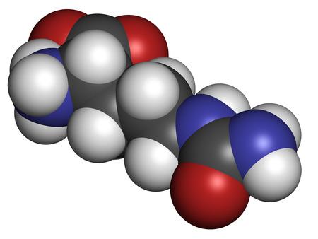 amoniaco: Mol�cula de amino�cido citrulina. Presente en algunos suplementos diet�ticos deportivos. Los �tomos se representan como esferas con codificaci�n convencional color: hidr�geno (blanco), el carb�n (gris), nitr�geno (azul), el ox�geno (roja).