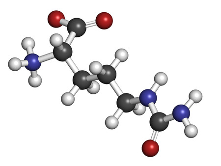 urea: Citrulline amino acid molecule. Present in some athletic dietary supplements. Atoms are represented as spheres with conventional color coding: hydrogen (white), carbon (grey), nitrogen (blue), oxygen (red).